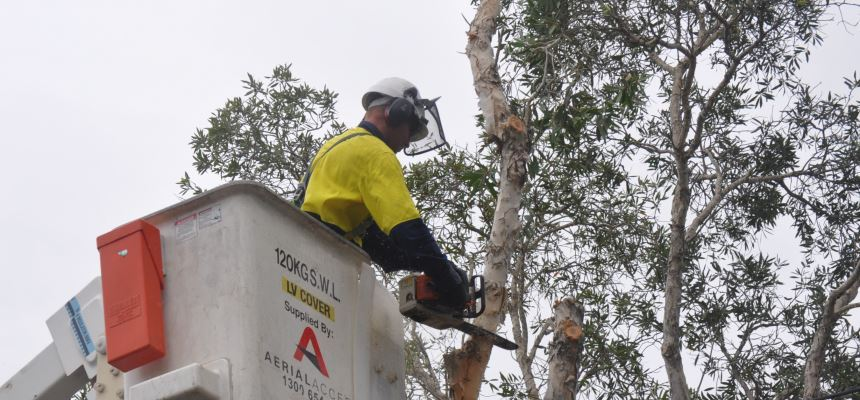 Tree, Shrub and Vegetation Removal